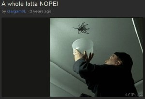imgur - a whole lotta nope - spider jump